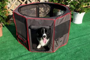 When We Took A Close Look At The Petsfit Portable Foldable Pop Up Dog  PlayPen Exercise Pen, We Liked What We Read. In Fact, We Liked It So Much  That We ...