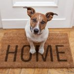 Dog sitting on welcome mat